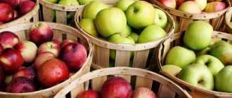 Как сделать самогон из яблочного сока в домашних условиях