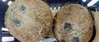 Как выбрать кокос в магазине? Советы