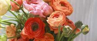 Как упаковать букет из живых цветов (секрет свежести)