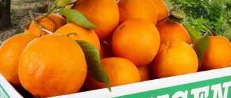 Сколько углеводов в апельсине? Какие витамины в апельсине? Состав и полезные свойства фрукта
