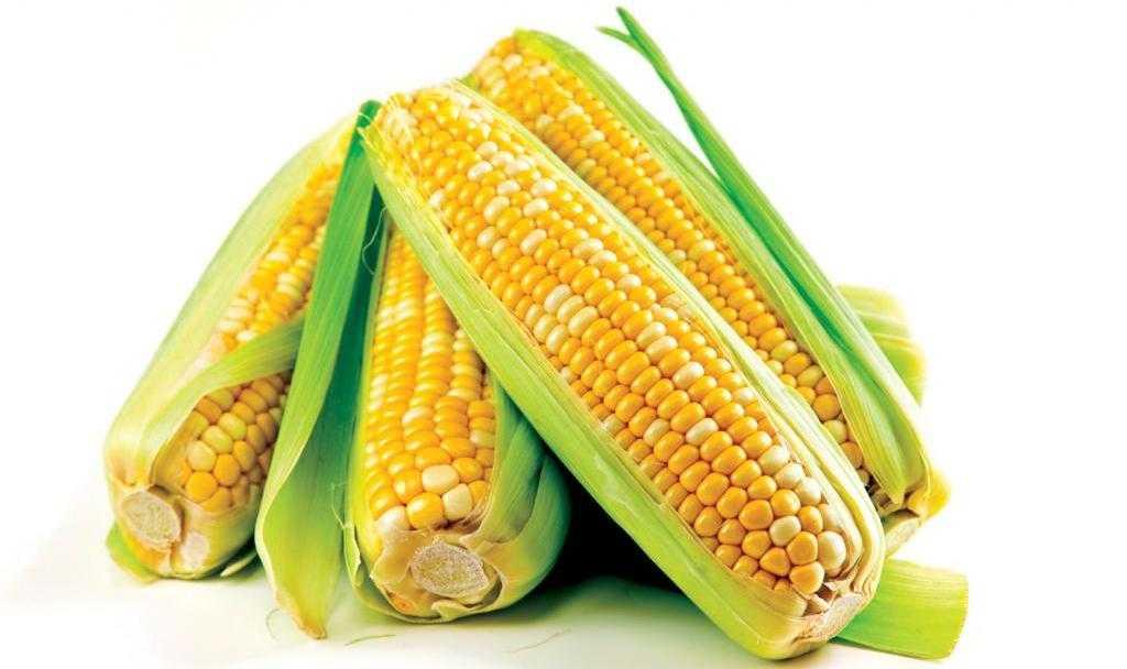 Чем полезна консервированная кукуруза и в чем ее вред для организма?