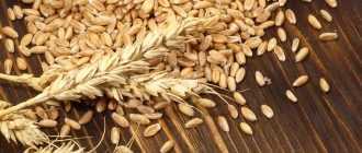 Солодовый хлеб: польза и вред, состав, калорийность