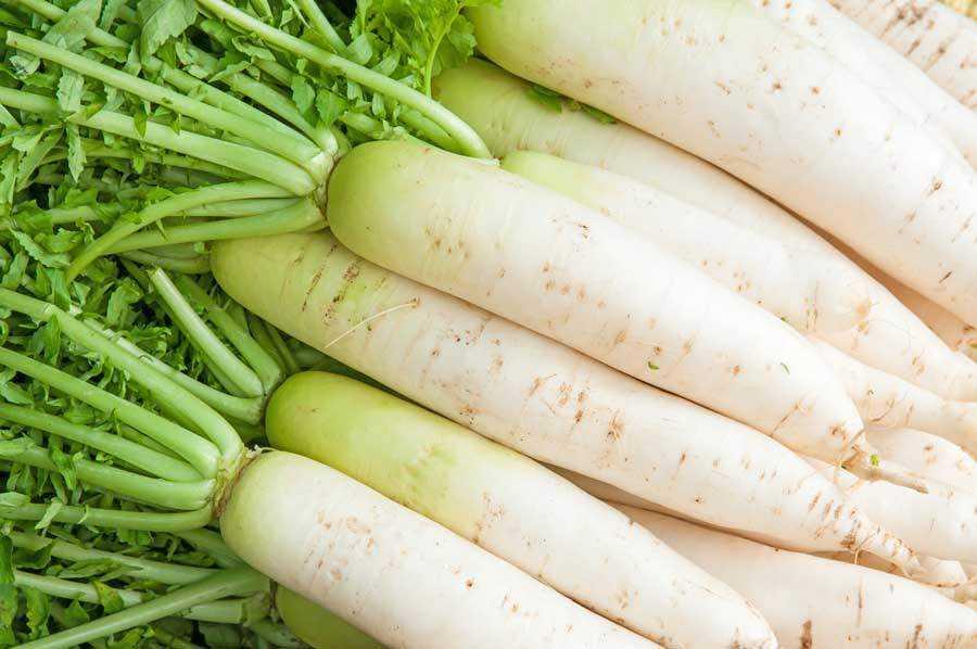 Белая редька: рецепты приготовления блюд с фото