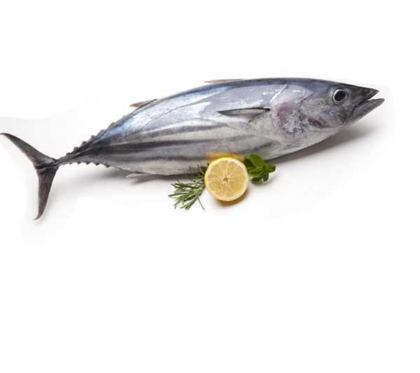 Суп из свежего тунца: рецепт приготовления с фото