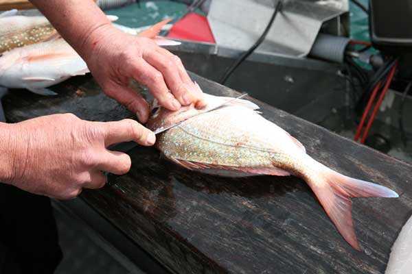 Диетические рыбные котлеты в духовке: вкусные рецепты