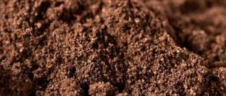 Пирог с молотой черемухой: варианты приготовления, ингредиенты, рецепты