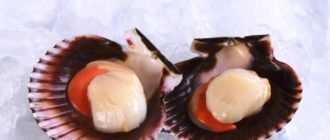 Как готовить морские гребешки