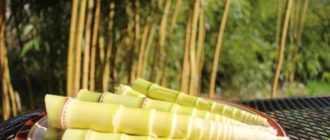 Побеги бамбука: состав, полезные свойства, рецепты