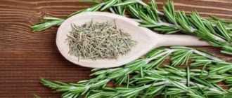 Розмарин сушеный: состав, полезные свойства и применение в кулинарии