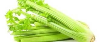 Состав сельдерея: белки, жиры, углеводы, витамины и минералы