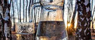 Как приготовить березовый сок в домашних условиях: рецепты и полезные советы